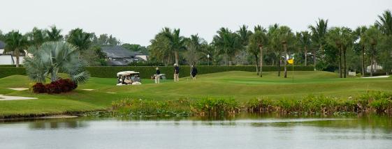sarasota_golf_561